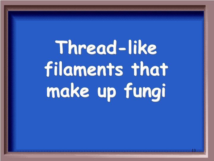 Thread-like filaments that make up fungi