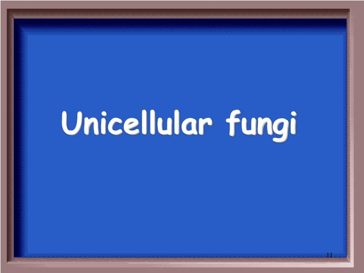 Unicellular fungi