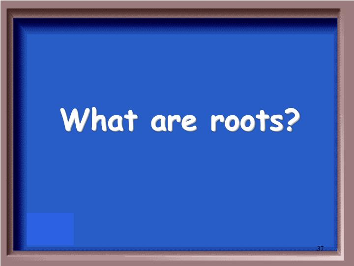 What are roots?