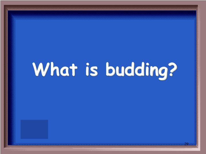 What is budding?