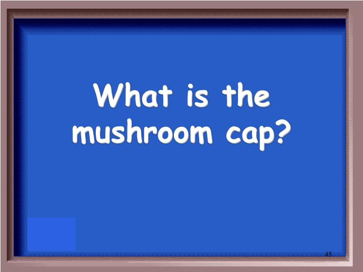 What is the mushroom cap?