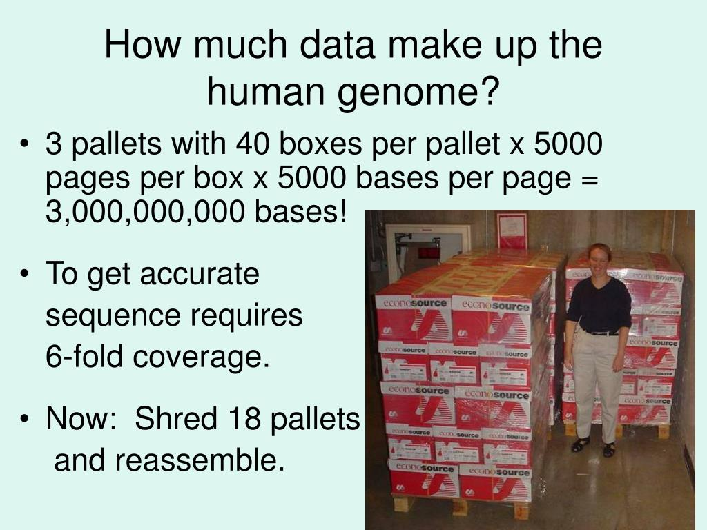 How much data make up the human genome?