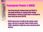 transgenic plants @ nmsu