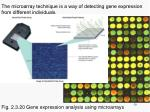 the microarray technique is a way of detecting gene expression from different individuals