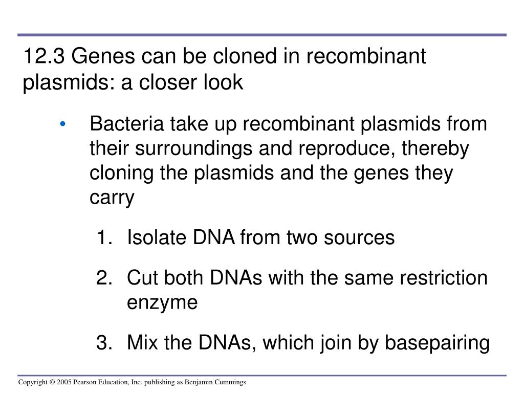 12.3 Genes can be cloned in recombinant plasmids: a closer look