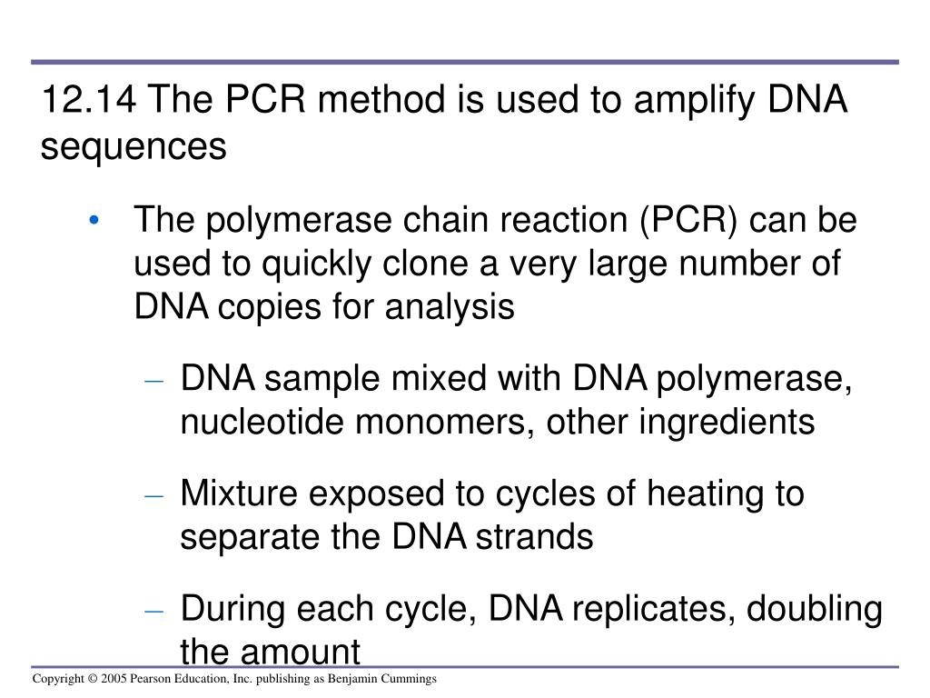 12.14 The PCR method is used to amplify DNA sequences