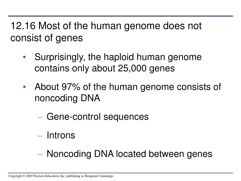 12.16 Most of the human genome does not consist of genes