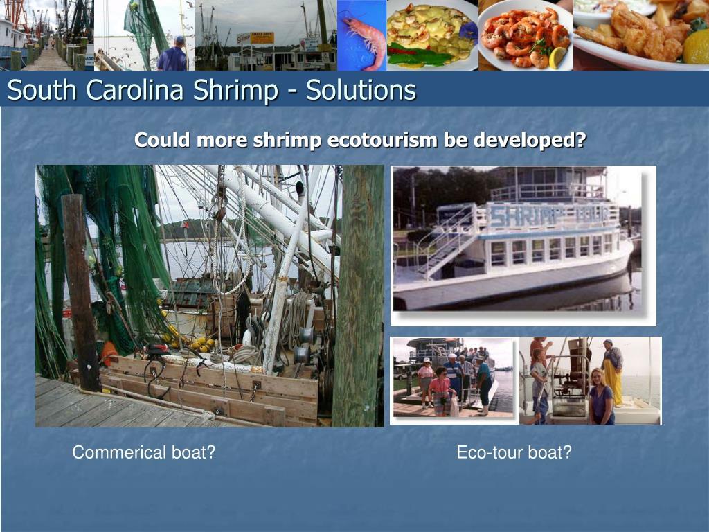 Could more shrimp ecotourism be developed?
