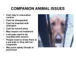 companion animal issues