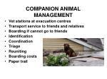 companion animal management