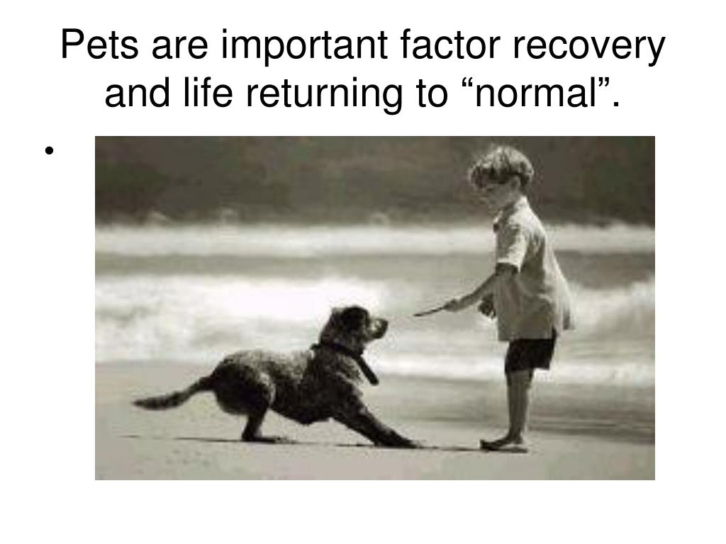 """Pets are important factor recovery and life returning to """"normal""""."""