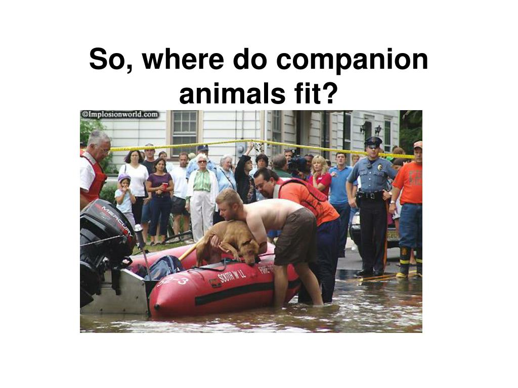 So, where do companion animals fit?