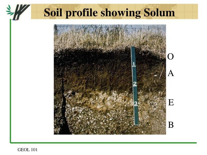 Soil profile showing Solum
