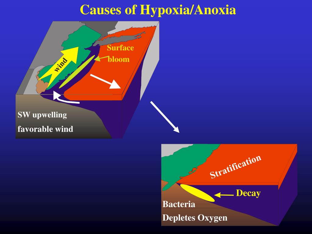 Causes of Hypoxia/Anoxia