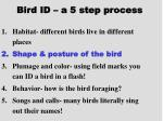 bird id a 5 step process14