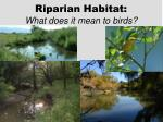 riparian habitat what does it mean to birds