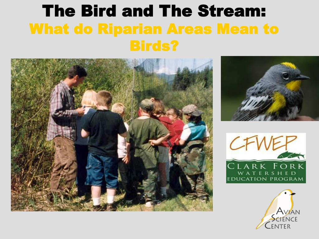 the bird and the stream what do riparian areas mean to birds