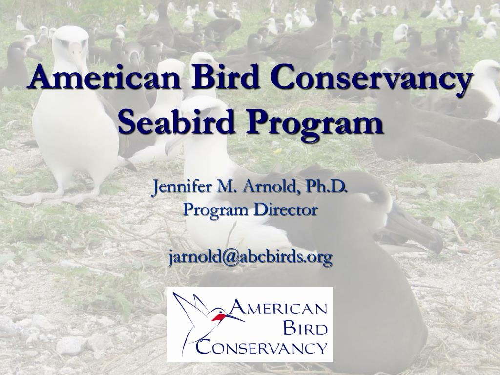 american bird conservancy seabird program l.