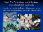 goal 1 protecting seabirds from bycatch related mortality