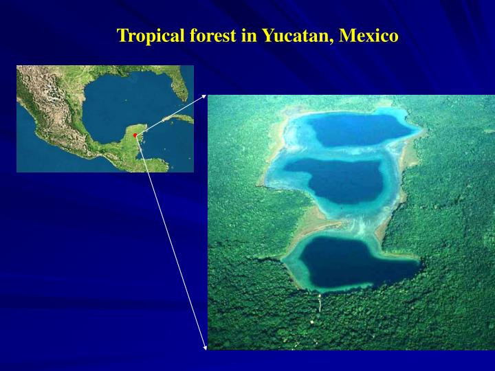 Tropical forest in Yucatan, Mexico