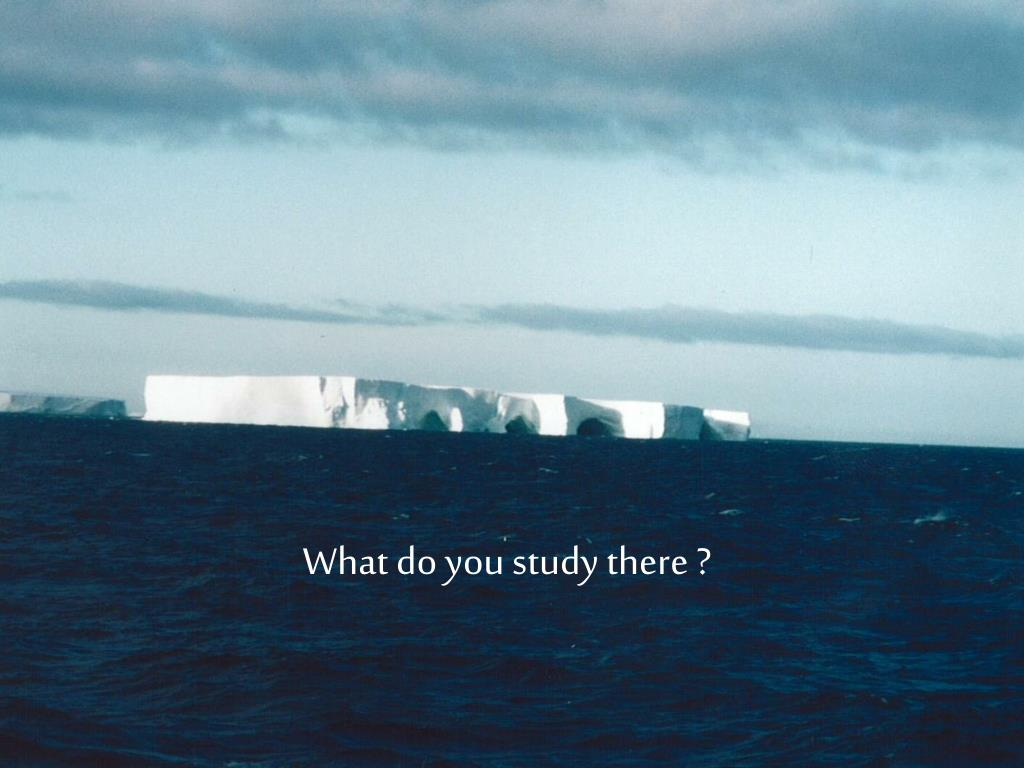 What do you study there ?
