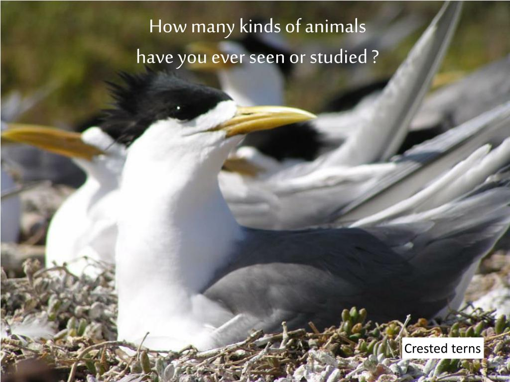 How many kinds of animals