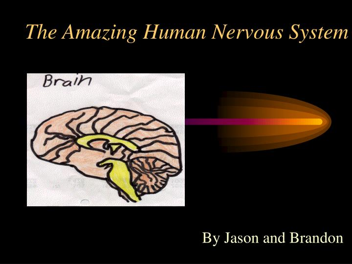 the amazing human nervous system n.