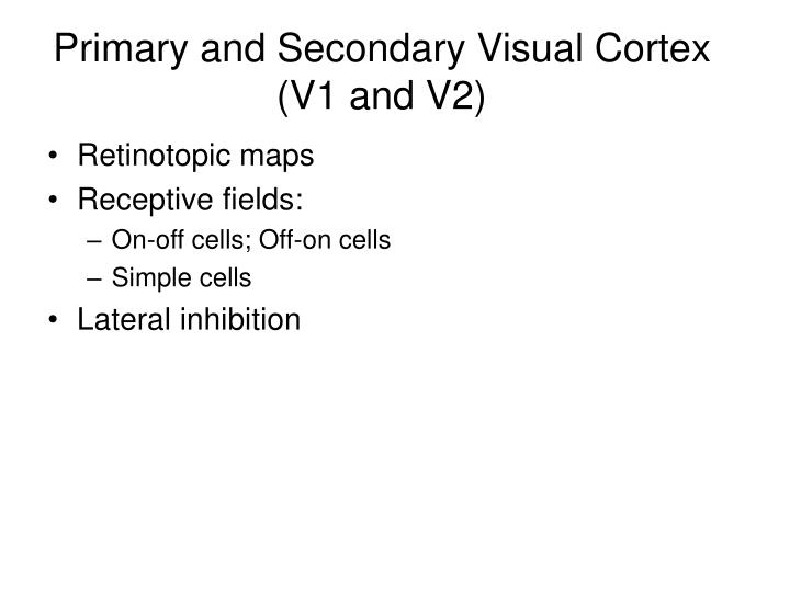 Primary and Secondary Visual Cortex (V1 and V2)