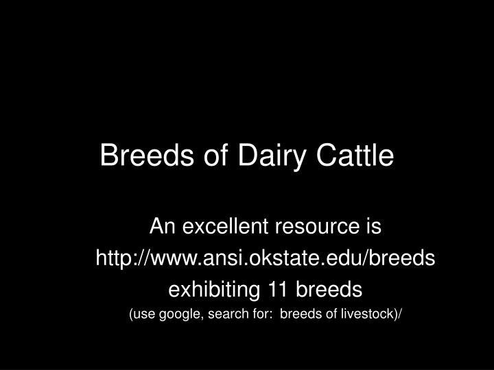 breeds of dairy cattle n.