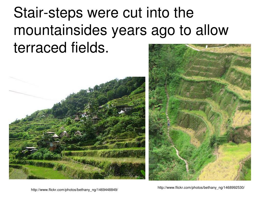 Stair-steps were cut into the mountainsides years ago to allow terraced fields.