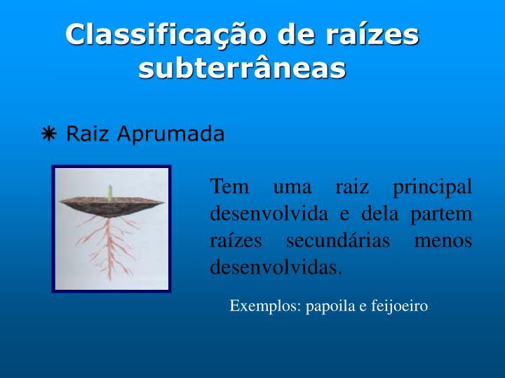 Classificação de raízes subterrâneas