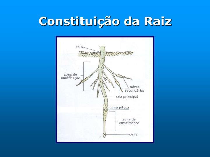 Constituição da Raiz