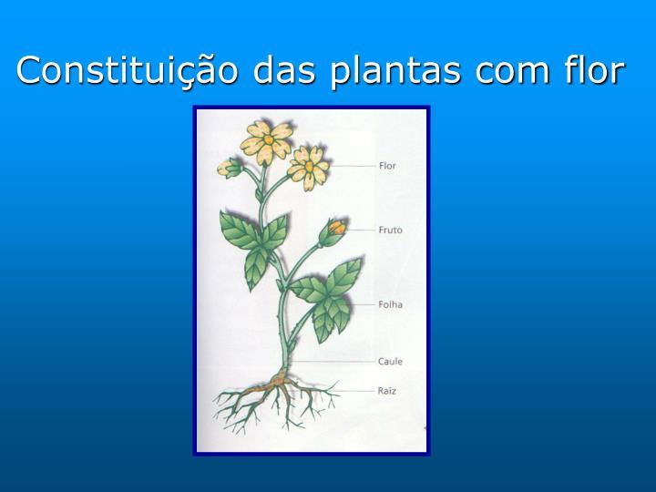 Constitui o das plantas com flor