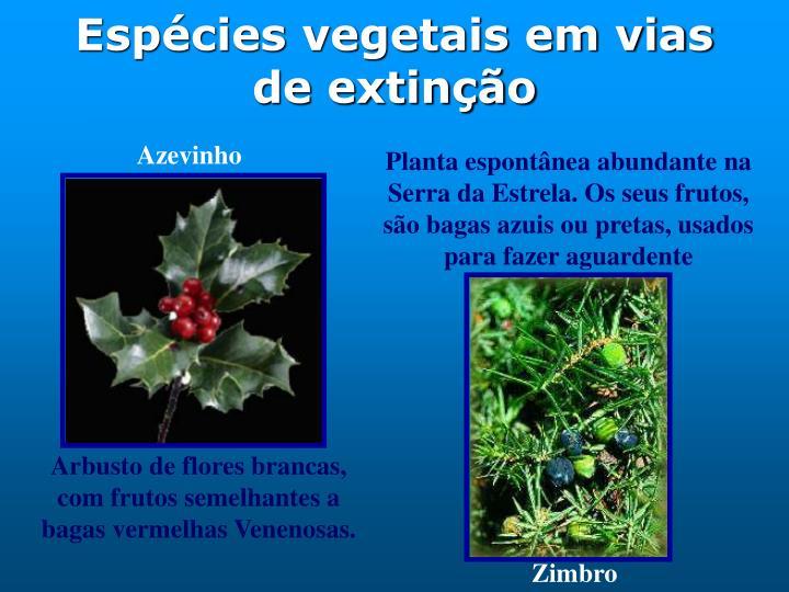 Espécies vegetais em vias de extinção