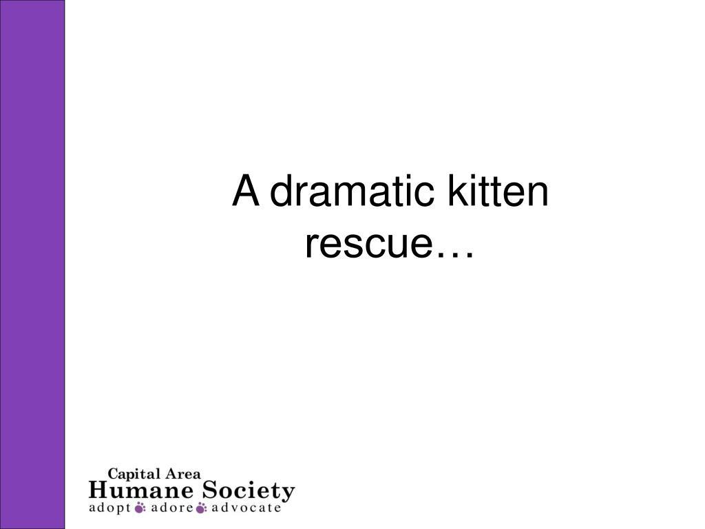 a dramatic kitten rescue l.