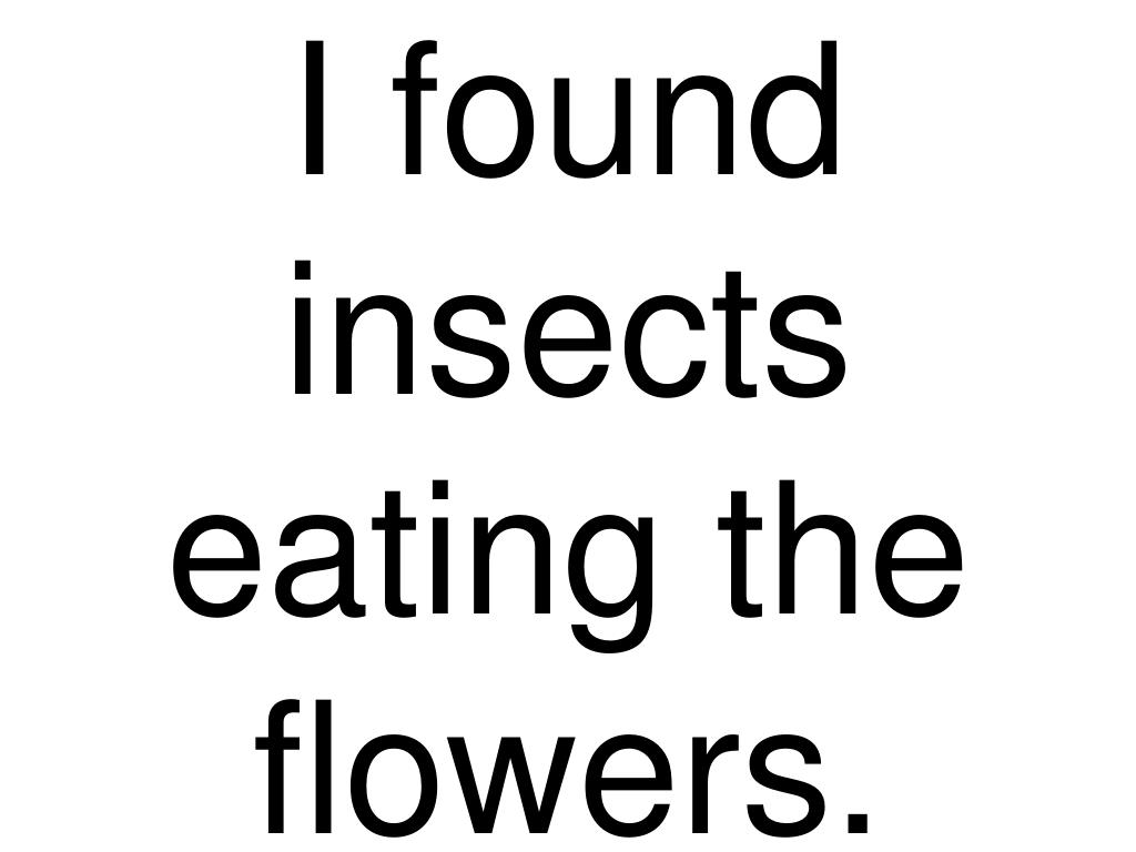 I found insects eating the flowers.