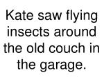 kate saw flying insects around the old couch in the garage