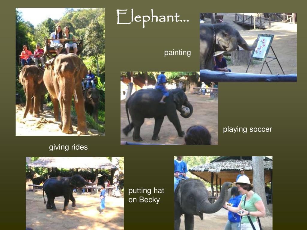 Elephant…