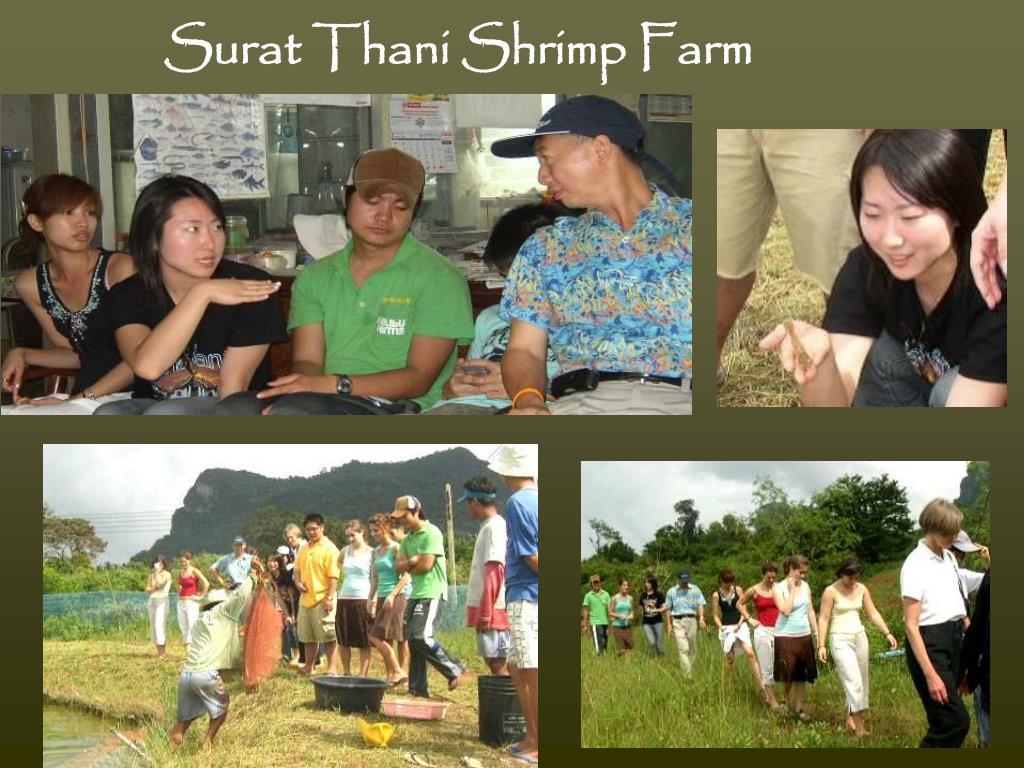 Surat Thani Shrimp Farm