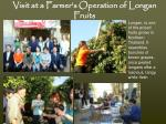 visit at a farmer s operation of longan fruits