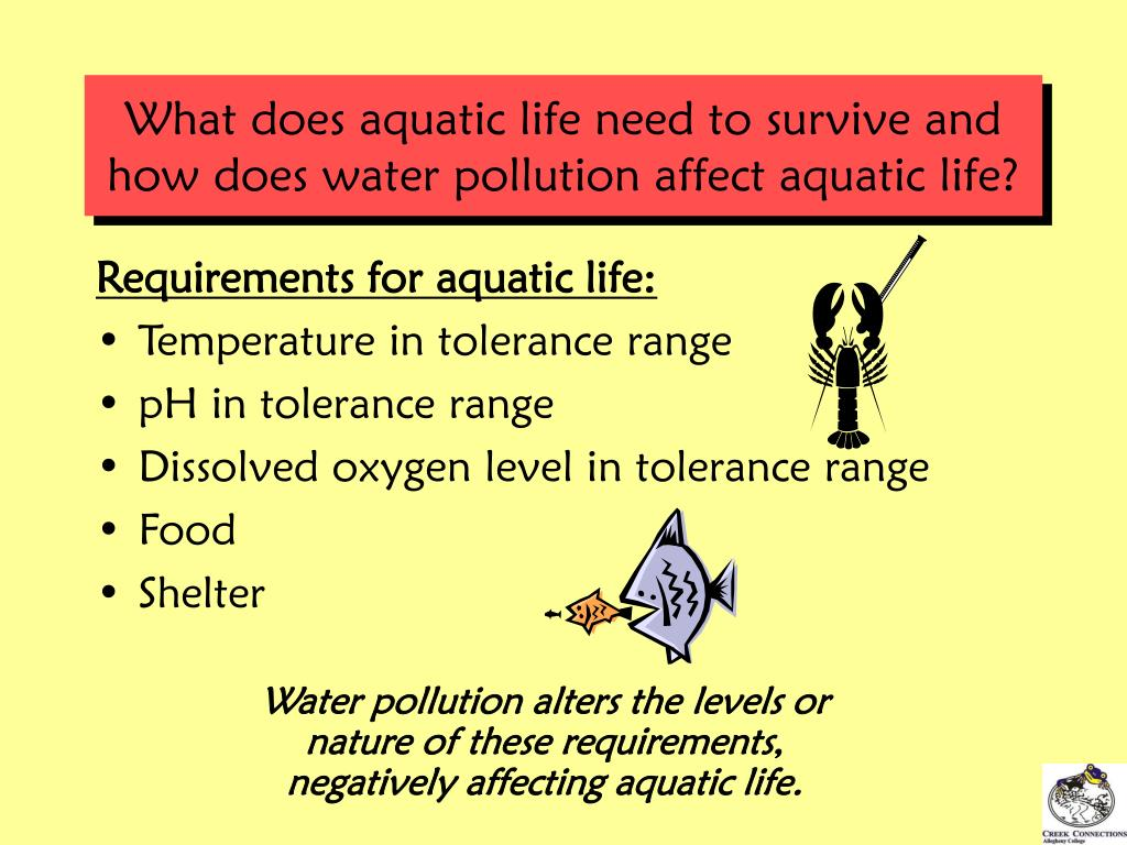 What does aquatic life need to survive and how does water pollution affect aquatic life?