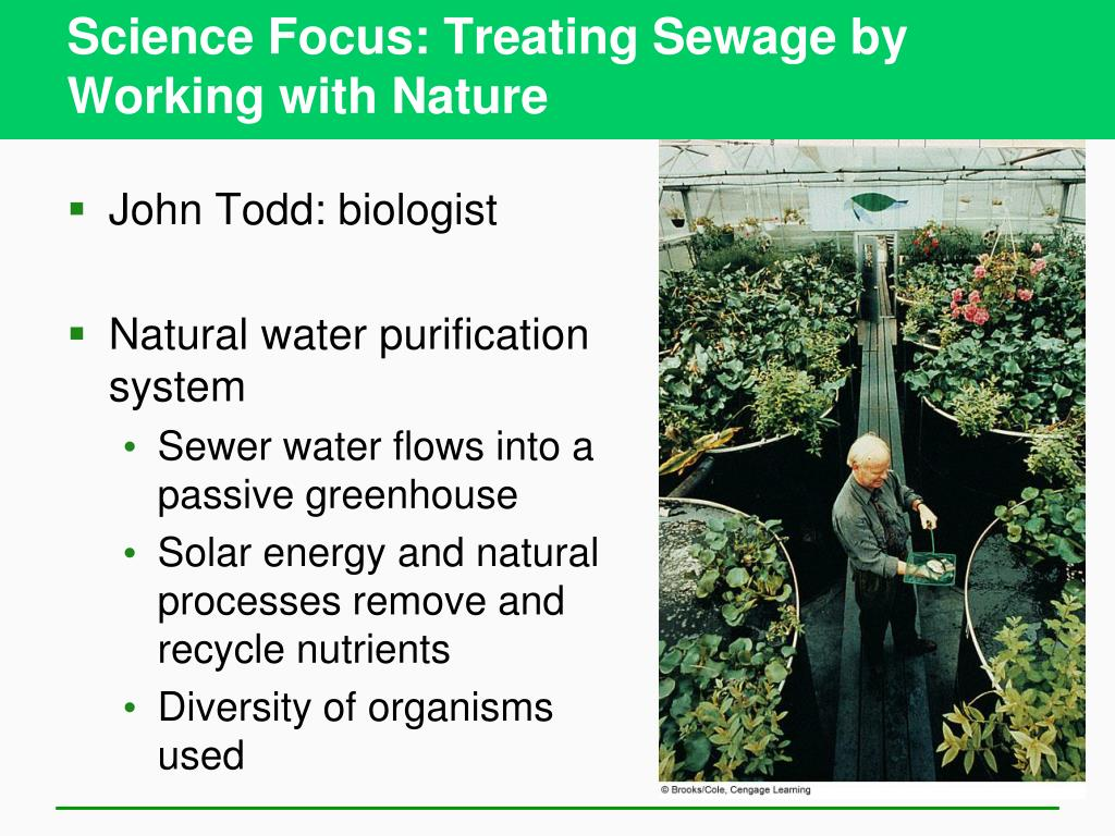Science Focus: Treating Sewage by Working with Nature