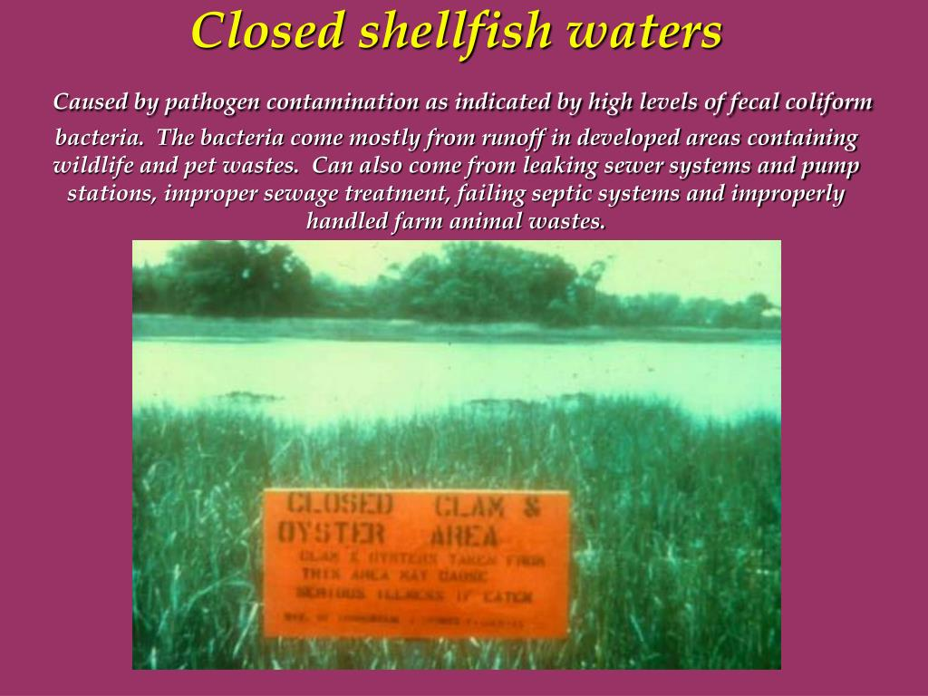 Closed shellfish waters