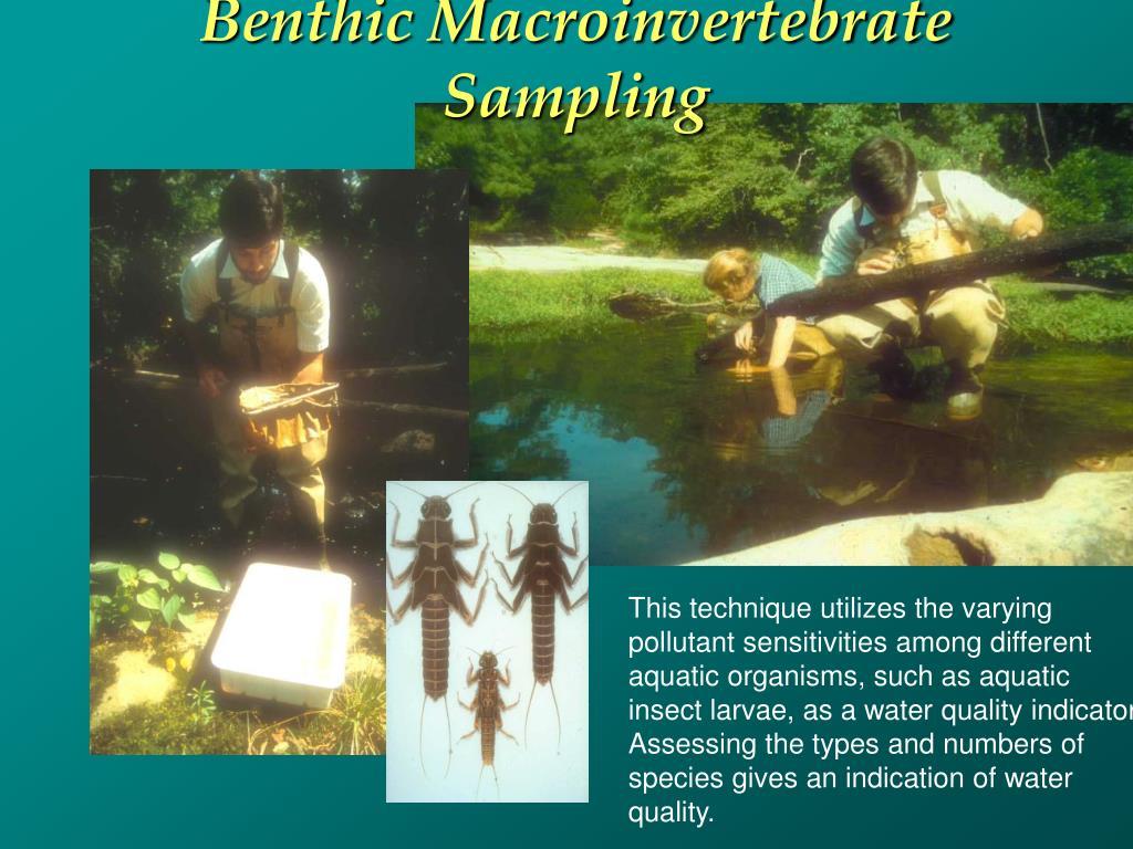 Benthic Macroinvertebrate Sampling