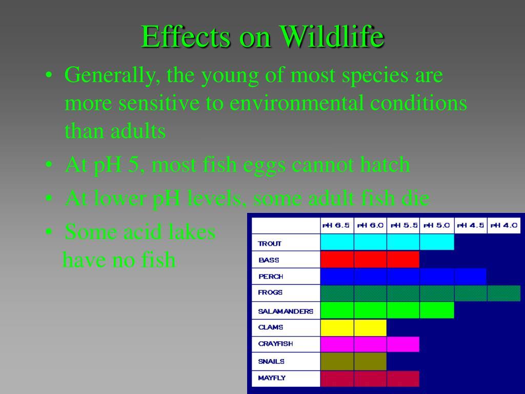Effects on Wildlife