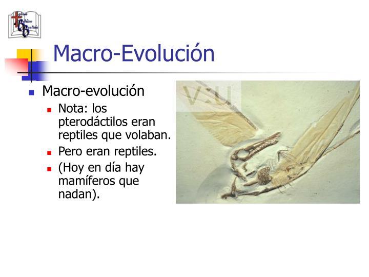 Macro-Evolución