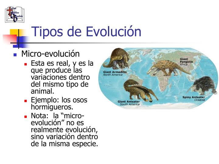 Tipos de Evolución