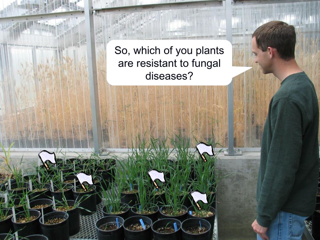 So, which of you plants are resistant to fungal diseases?