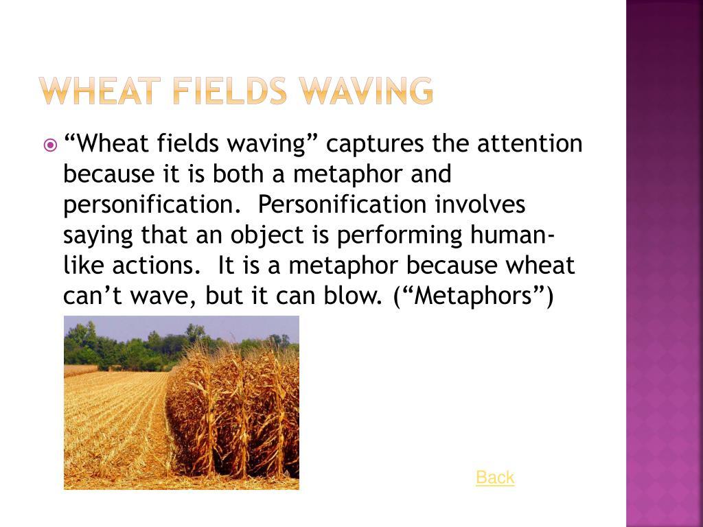 Wheat Fields Waving