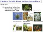 epiphytes parasitic plants and carnivorous plants